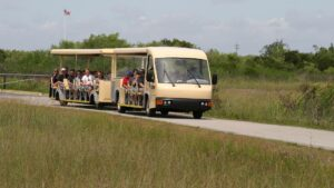 Shark Valley Tram Tour Bus driving through the Everglades
